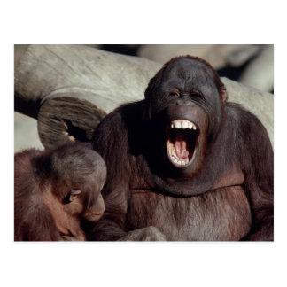 Wildlife Set - Primates 1 Postcard