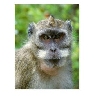 Wildlife Set - Primates 2 Postcard