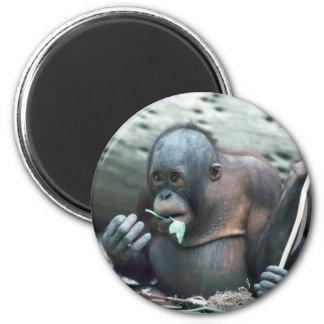 Wildlife Set - Primates 4 Magnet