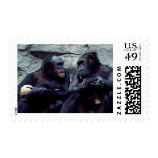 Wildlife Set - Primates 5 Postage