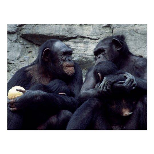 Wildlife Set - Primates 5 Postcard