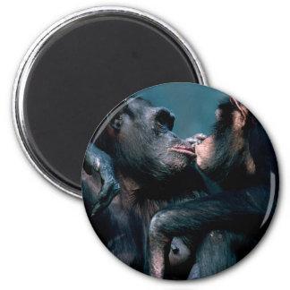 Wildlife Set - Primates 6 Magnet