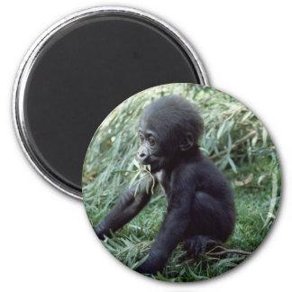 Wildlife Set - Primates 8 Magnet