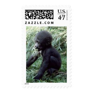 Wildlife Set - Primates 8 Postage