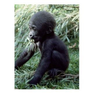 Wildlife Set - Primates 8 Postcard