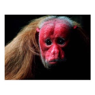 Wildlife Set - Primates 9 Postcard