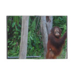Wildlife Stink Eye Case For iPad Mini