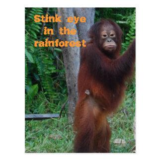 Wildlife Stink Eye Post Card