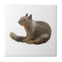 Wildlife tile, ceramic, wild animals, squirrel tile