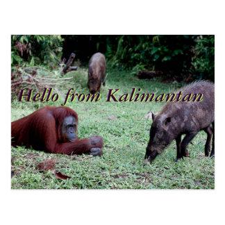 Wildlife Travel Borneo Post Card