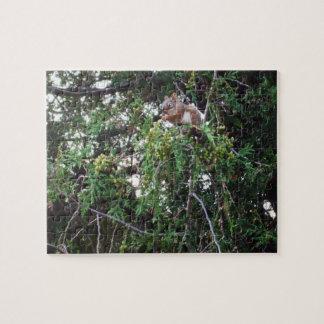 Wildlife Week Squirrel Eating Cedar Seeds Jigsaw Puzzle
