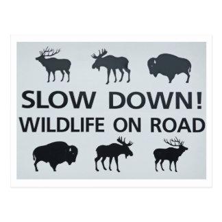 wildlifesign tarjetas postales