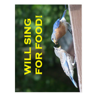 Will Sing For Food Postcard