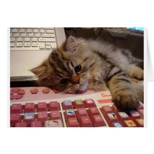 Will work for a catnip card