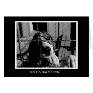 Will You? Animal Notecards Card