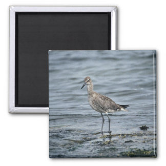 Willet Imán