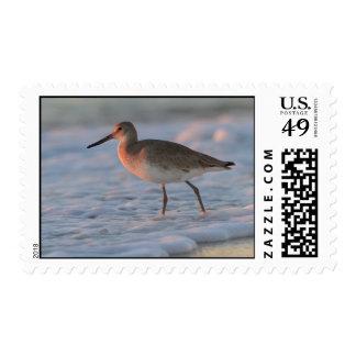 Willet Stamp