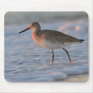 Willet Mousepad