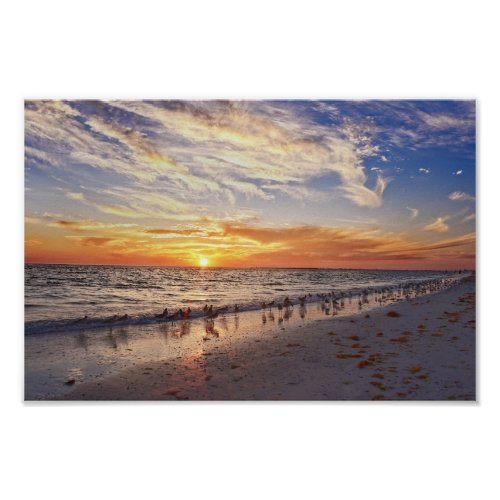 Willets on a Florida Beach at Sunset Poster