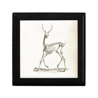 William Cheselden Deer Skeleton Gift Box