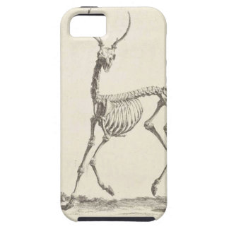 William Cheselden Deer Skeleton iPhone SE/5/5s Case