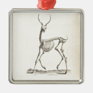 William Cheselden Deer Skeleton Silver-Colored Square Decoration