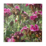 Williams dulce rosado teja cerámica