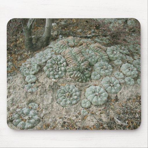 Williamsii del Lophophora - Peyote Tapete De Raton