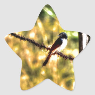 WILLIE WAGTAIL ON A FENCE AUSTRALIA ART EFFECTS STAR STICKER