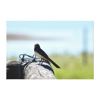 WILLIE WAGTAIL ON FENCE RURAL QUEENSLAND AUSTRALIA CANVAS PRINT