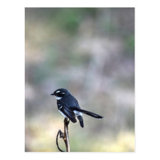 WILLIE WAGTAIL RURAL QUEENSLAND AUSTRALIA POSTCARD