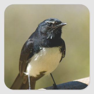 Willie Wagtail Square Sticker