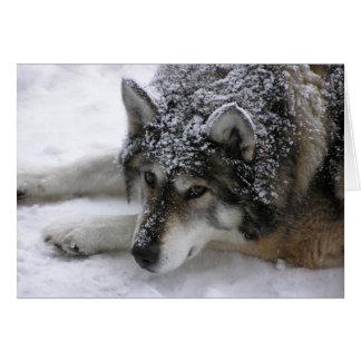Willie wolf card