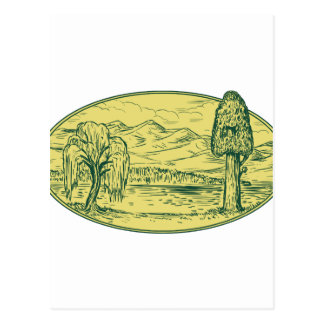 Willow And Sequoia Tree Lake Mountains Oval Drawin Postcard