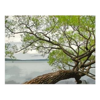 Willow at Cayuga Lake