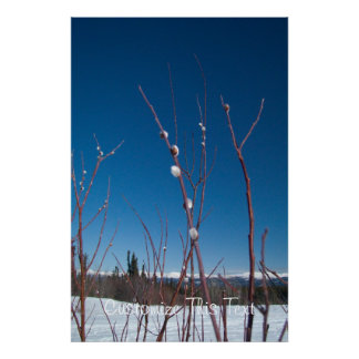 Willow Catkin Portrait; Customizable Posters