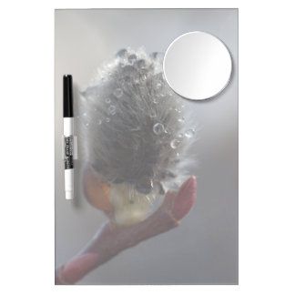 Willow Catkin Study Dry Erase Board With Mirror