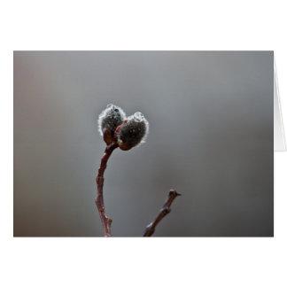 Willow Catkins After Spring Rain; Customizable Card