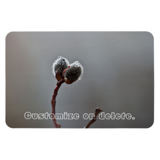 Willow Catkins After Spring Rain; Customizable Magnet