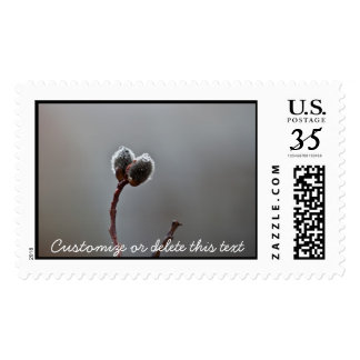 Willow Catkins After Spring Rain; Customizable Postage