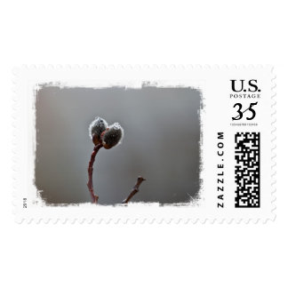 Willow Catkins After Spring Rain Postage