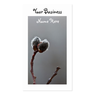 Willow Catkins After Spring Rain; Promotional Business Card