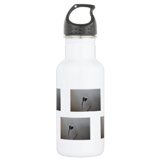 Willow Catkins After Spring Rain Stainless Steel Water Bottle