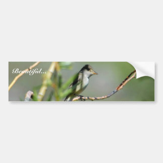Willow Flycatcher Car Bumper Sticker