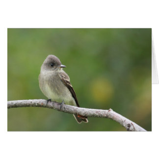 Willow Flycatcher Card