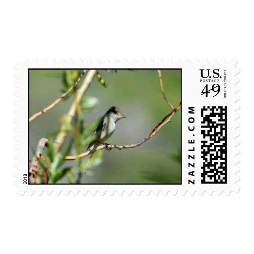 Willow Flycatcher Postage Stamp