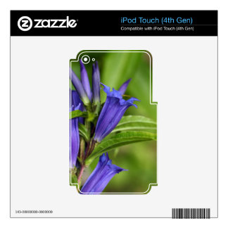 Willow gentian (Gentiana asclepiadea) Decals For iPod Touch 4G