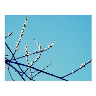 willow postcard