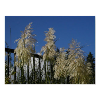 Willowy weeds on an autumn day poster