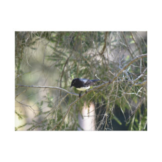WILLY WAGTAIL IN A TREE IN QUEENSLAND AUSTRALIA CANVAS PRINT